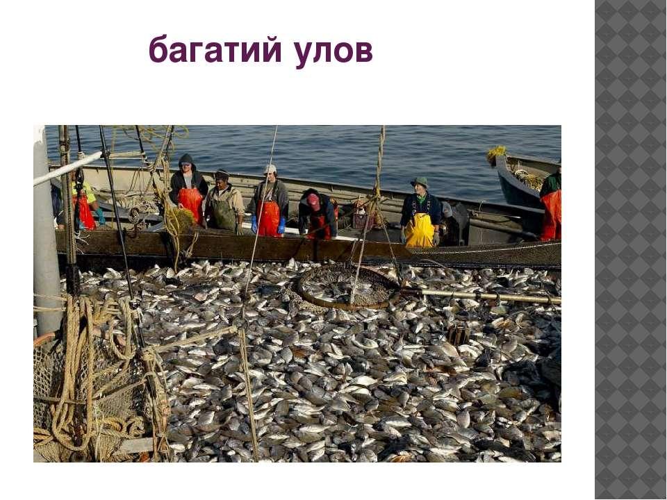 багатий улов