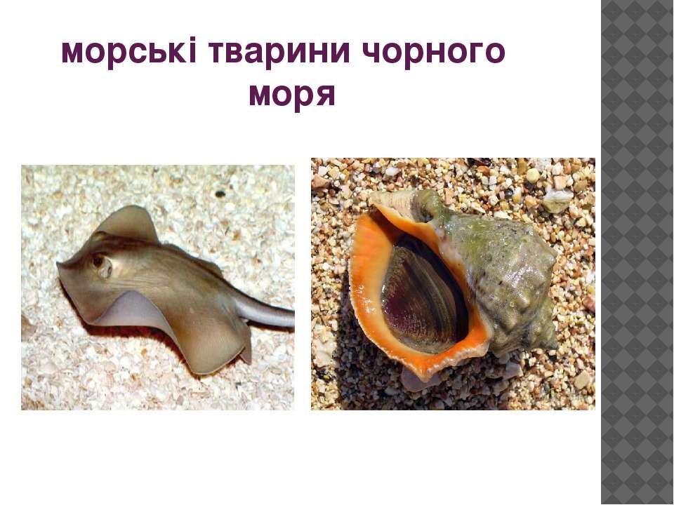 морські тварини чорного моря
