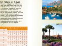 The nature of Egypt The nature of Egypt is not different from other cities: p...