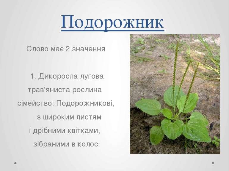 Подорожник Слово має 2 значення 1. Дикоросла лугова трав'яниста рослина сімей...