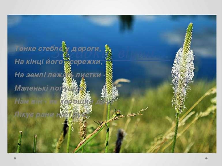 Загадки, вірші… Тонке стебло у дороги, На кінці його - сережки, На землі лежа...