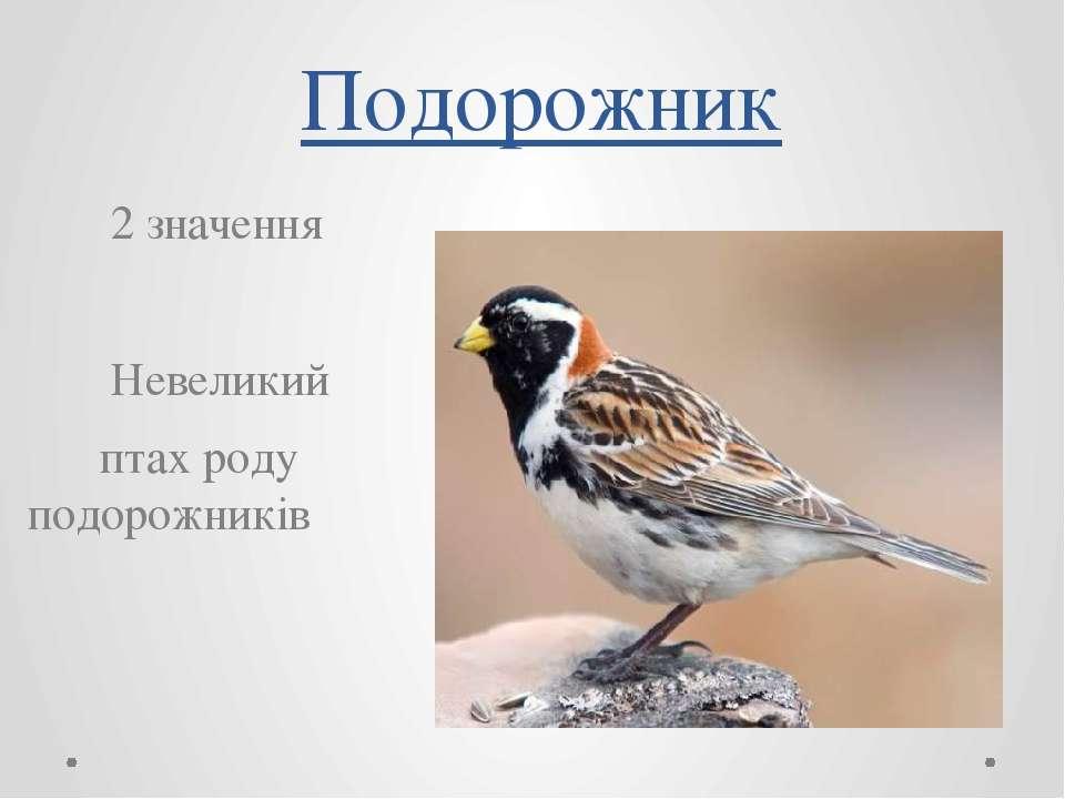 Подорожник 2 значення Невеликий птах роду подорожників