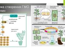 Схема створення ГМО рослин
