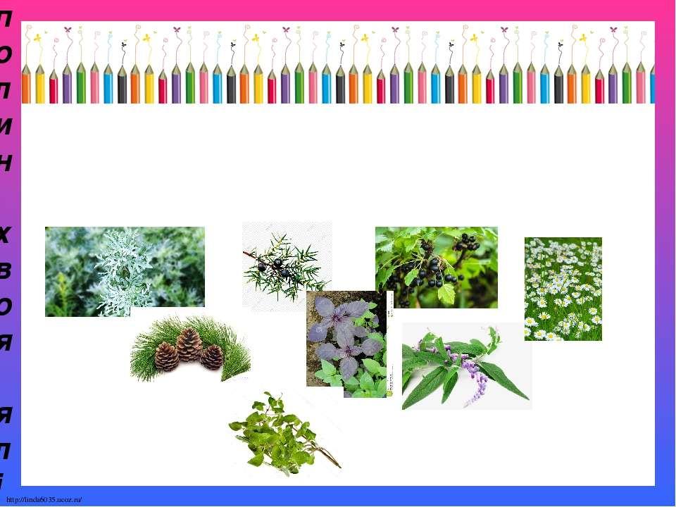 полин, хвоя, ялівець, базилік, смородинове листя, шавлія, ромашка, материнка,...