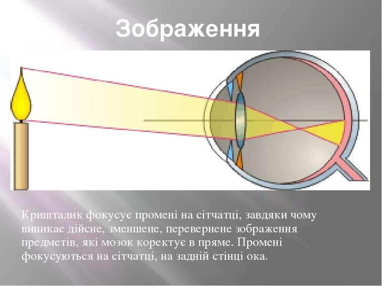 Зображення Кришталик фокусує промені на сітчатці, завдяки чому виникає дійсне...