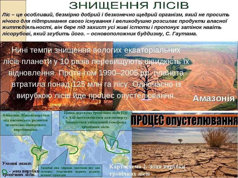 Амазонія. Масові вирубки під пасовиська, розвиток целюлозно-паперового виробн...