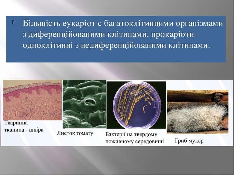 Більшість еукаріот є багатоклітинними організмами з диференційованими клітина...