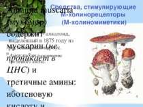 Средства, стимулирующие М-холинорецепторы (М-холиномиметики) Пилокарпин - алк...
