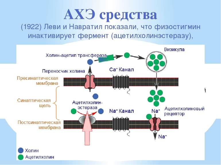 способен создавать пространственный блок анионного центра и эстеразного центр...