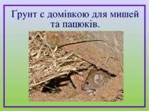 Ґрунт є домівкою для мишей та пацюків.