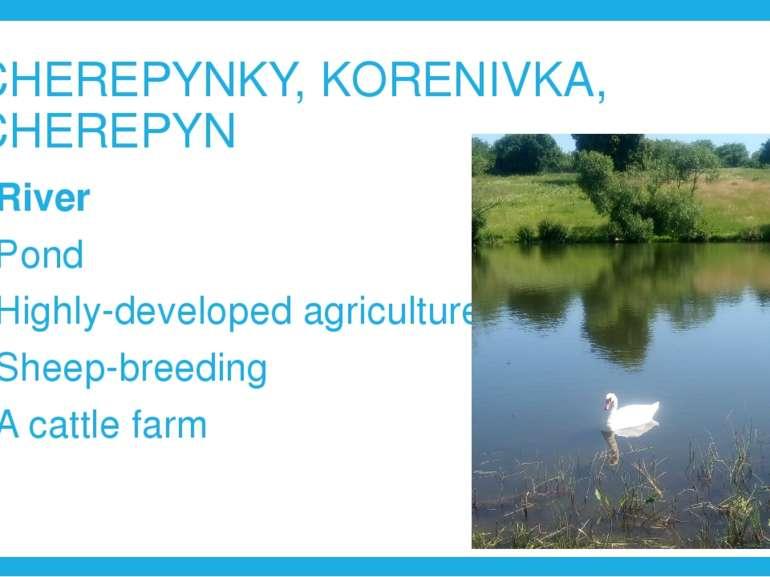 CHEREPYNKY, KORENIVKA, CHEREPYN River Pond Highly-developed agriculture Sheep...