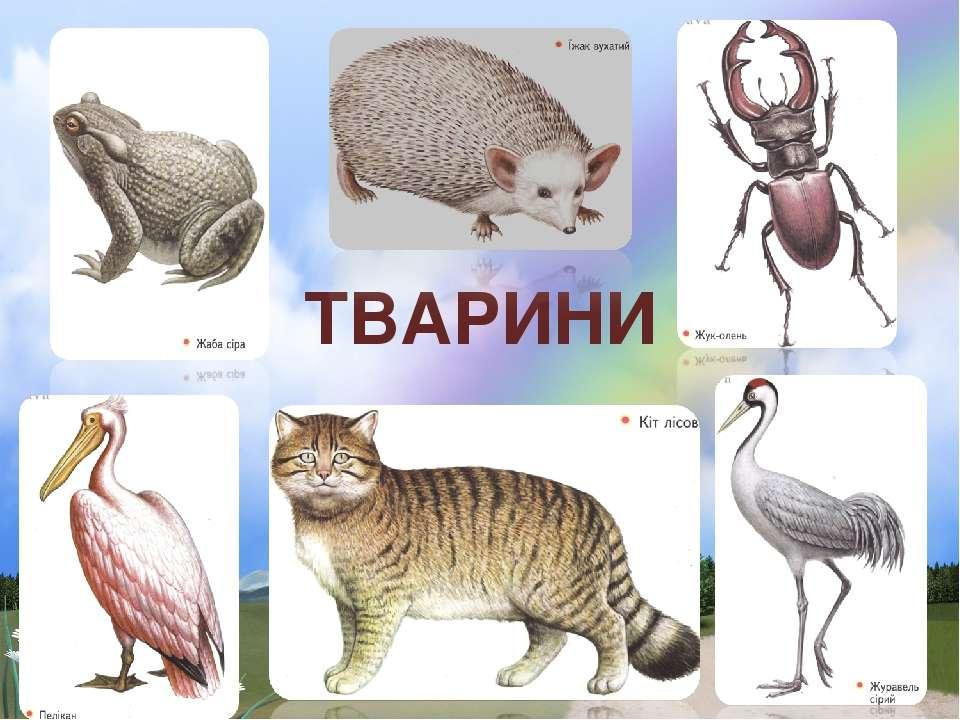 ТВАРИНИ