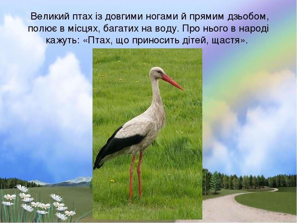 Великий птах iз довгими ногами й прямим дзьобом, полює в мiсцях, багатих на в...