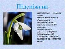 Підсніжник Підсніжник — це гарна лісова квітка.Підсніжники з'являються наприк...