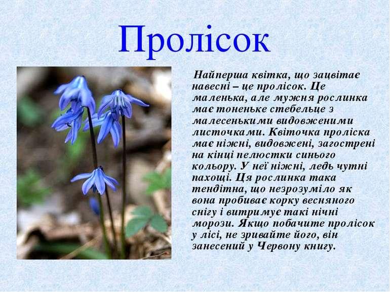Пролісок Найперша квітка, що зацвітає навесні – це пролісок.Це маленька, але...