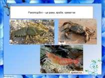 Ракоподібні – це раки, краби, креветки рак краб креветка
