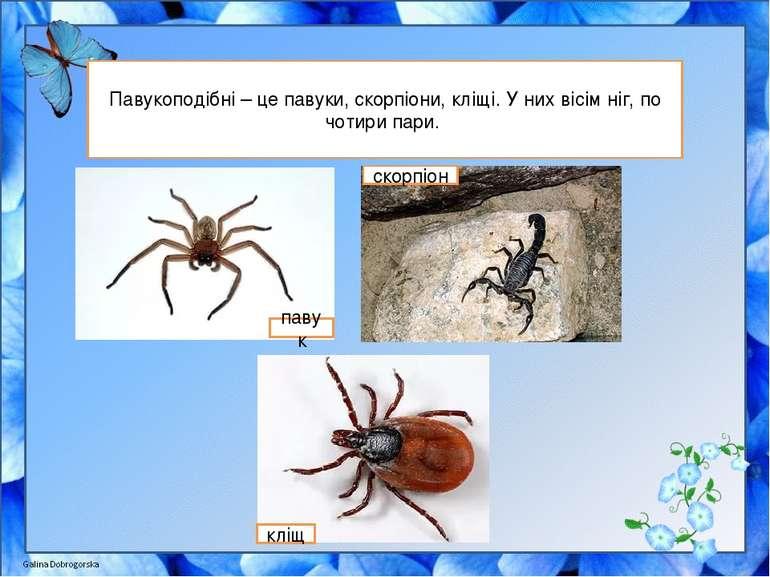 Павукоподібні – це павуки, скорпіони, кліщі. У них вісім ніг, по чотири пари....