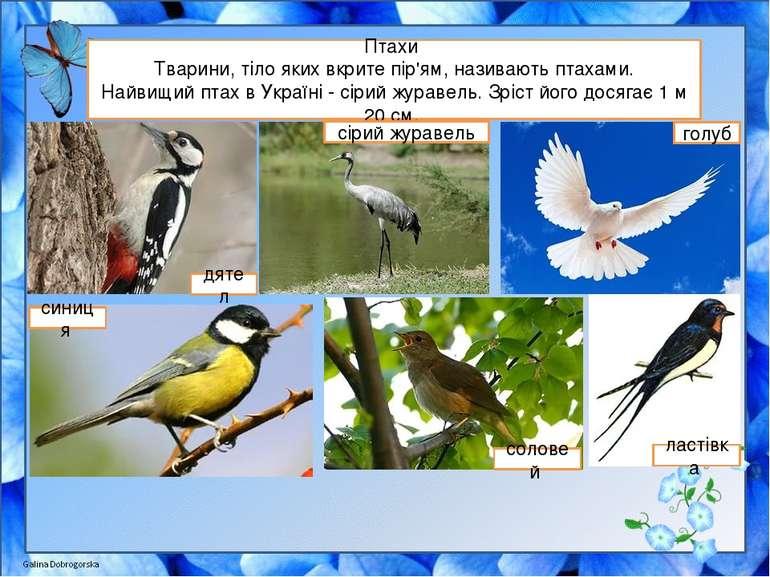 Птахи Тварини, тіло яких вкрите пір'ям, називають птахами. Найвищий птах в Ук...