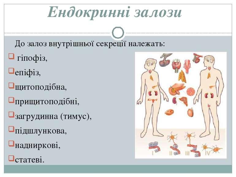 Ендокринні залози До залоз внутрішньої секреції належать: гіпофіз, епіфіз, щи...