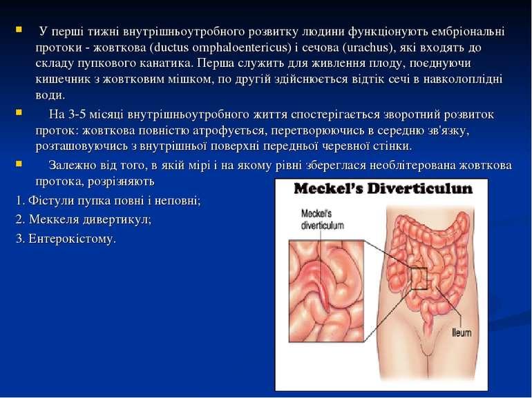 У перші тижні внутрішньоутробного розвитку людини функціонують ембріональні п...