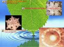 Цікаві факти про воду Лід швидше отримати з гарячої води Досліди показують, щ...