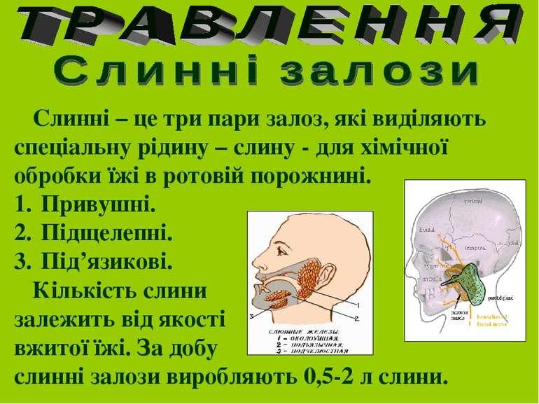 Слинні – це три пари залоз, які виділяють спеціальну рідину – слину - для хім...