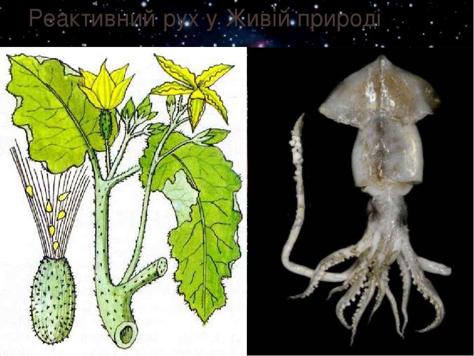 Реактивний рух у Живій природі У рослин: Середрослинреактивне рух...