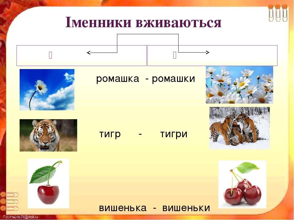 Іменники вживаються в однині в множині ромашка - ромашки тигр - тигри вишеньк...