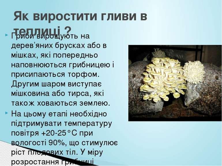 Гриби вирощують на дерев'яних брусках або в мішках, які попередньо наповнюють...
