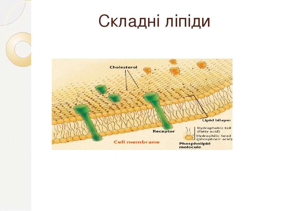 Складні ліпіди