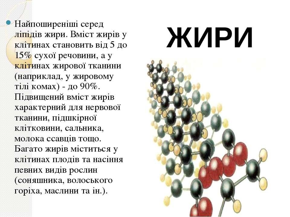 Найпоширеніші серед ліпідів жири. Вміст жирів у клітинах становить від 5 до 1...