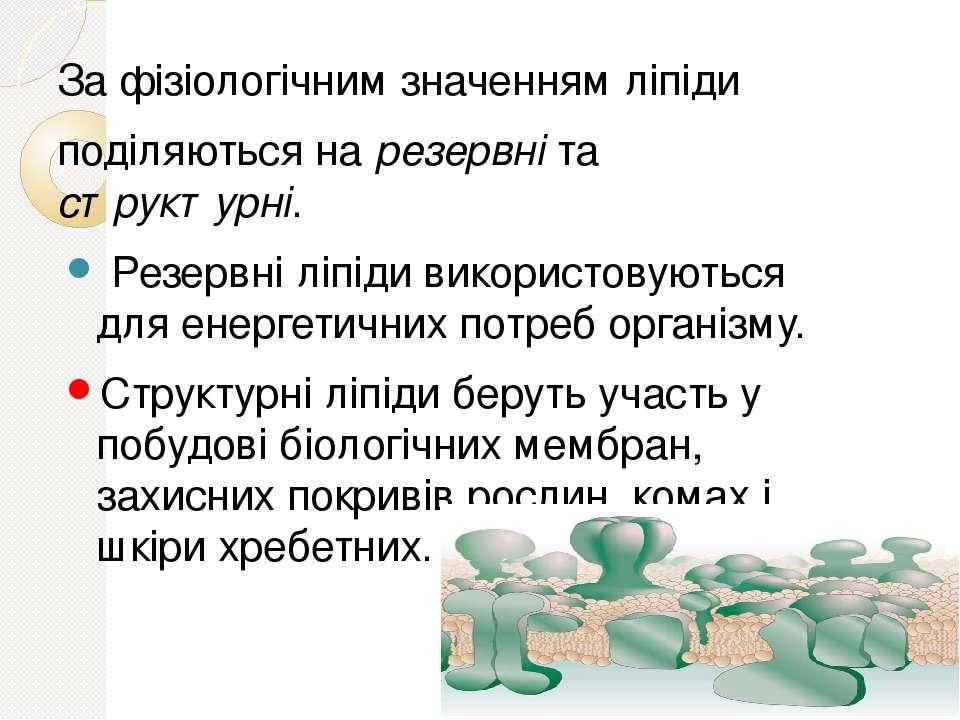 За фізіологічним значенням ліпіди поділяються на резервні та структурні. Резе...