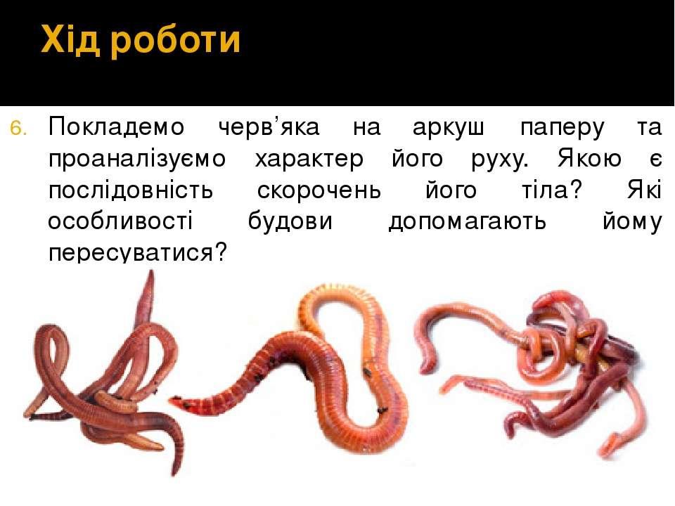 Хід роботи Покладемо черв'яка на аркуш паперу та проаналізуємо характер його ...