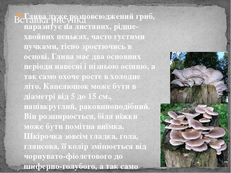 Глива дуже розповсюджений гриб, паразитує на листяних, рідше-хвойних пеньках,...