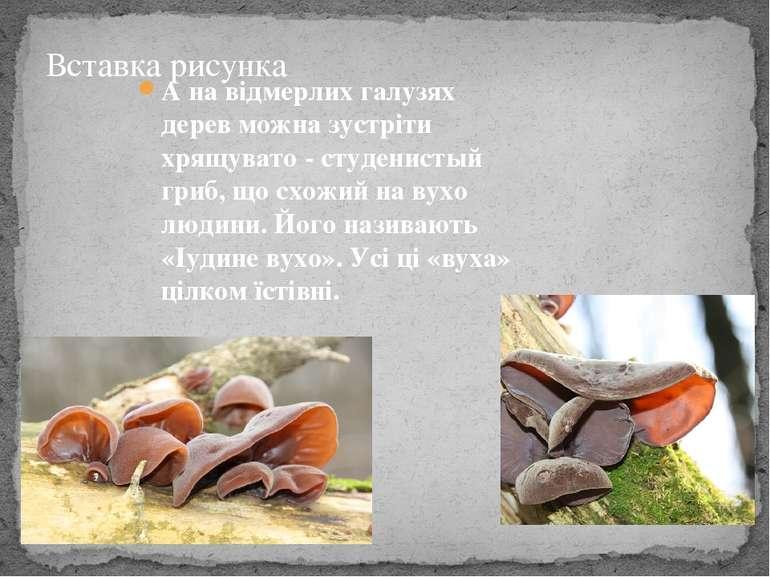 А на відмерлих галузях дерев можна зустріти хрящувато - студенистый гриб, що ...
