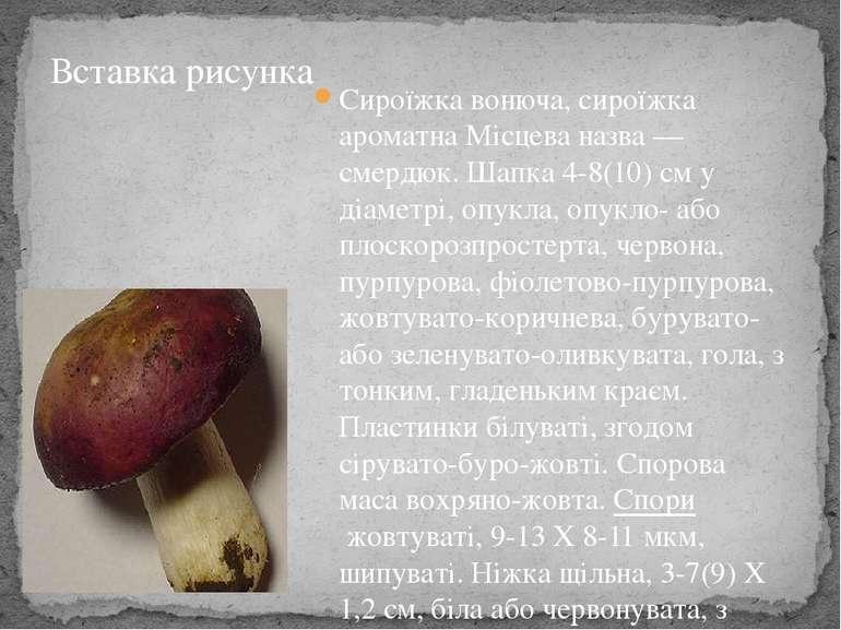 Сироїжка вонюча, сироїжка ароматнаМісцева назва— смердюк. Шапка 4-8(10) см ...