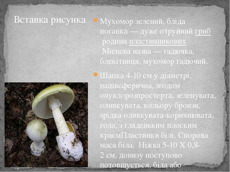 Мухомор зелений, бліда поганка— дуже отруйнийгрибродинипластинниковихМіс...