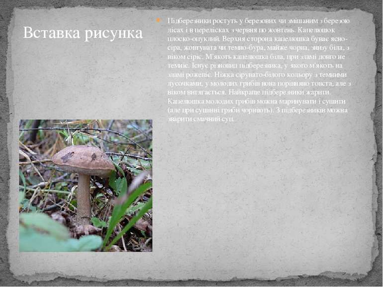 Підберезники ростуть у березових чи змішаним з березою лісах і в перелісках з...