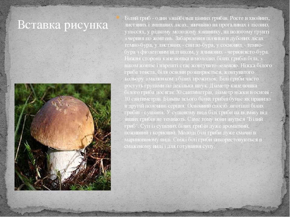 Білий гриб - один з найбільш цінних грибів. Росте в хвойних, листяних і зміша...