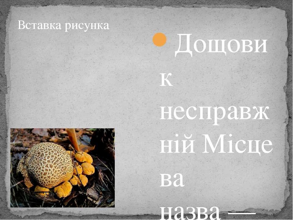 Дощовик несправжнійМісцева назва— твердошкір жовтий. Плодове тілоприплюсну...