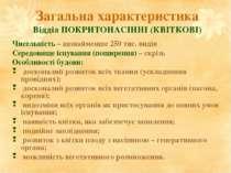 Загальна характеристика Відділ ПОКРИТОНАСІННІ (КВІТКОВІ) Чисельність – щонайм...
