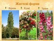 Життєві форми Дерева Кущі Трави Тополя чорна Калина Мальва
