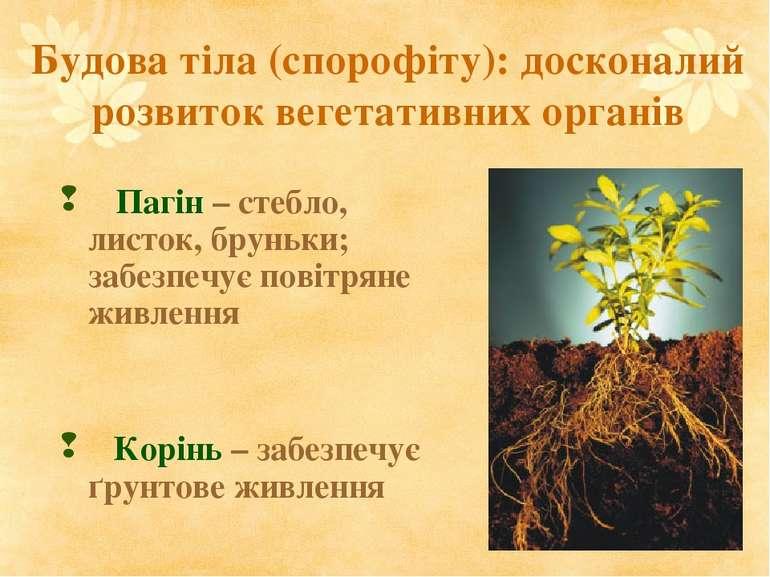 Будова тіла (спорофіту): досконалий розвиток вегетативних органів Пагін – сте...