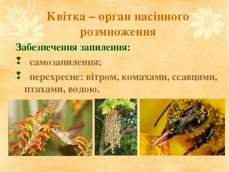 Квітка – орган насінного розмноження Забезпечення запилення: самозапилення; п...