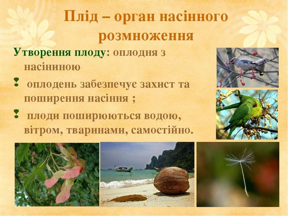 Плід – орган насінного розмноження Утворення плоду: оплодня з насіниною оплод...