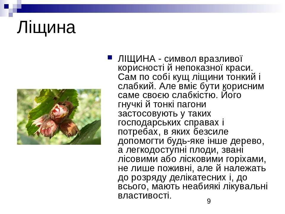 Ліщина ЛІЩИНА - символ вразливої корисності й непоказної краси. Сам по собі к...