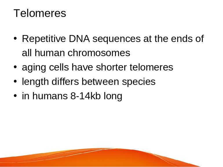 Telomeres Repetitive DNA sequences at the ends of all human chromosomes aging...