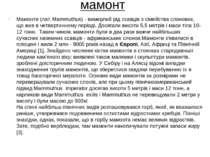 мамонт Мамонти (лат. Mammuthus) - вимерлий рід ссавців з сімейства слонових, ...