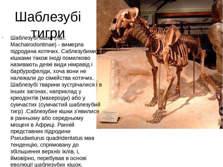 Шаблезубі тигри Шаблезубі кішки (лат. Machairodontinae) - вимерла підродина к...