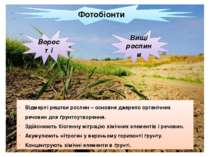 Фотобіонти Ворості Вищі рослини Відмерлі рештки рослин – основне джерело орга...